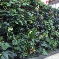 A living wall at the Royal Botanical Gardens in Burlington, Ontario. Shot January, 2016.