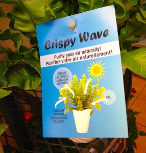 A plant tag for a Crispy Wave fern.