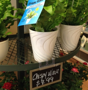 A store display of pots of ferns with a price sign.