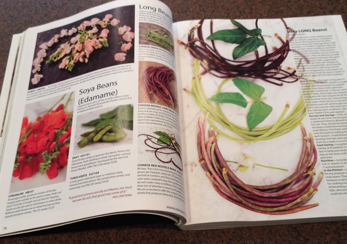 Pages showing long beans