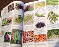Pages showing beans