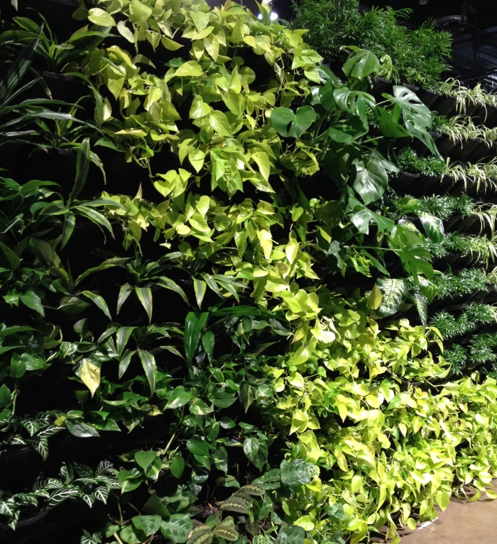 Plants in a vertical garden.