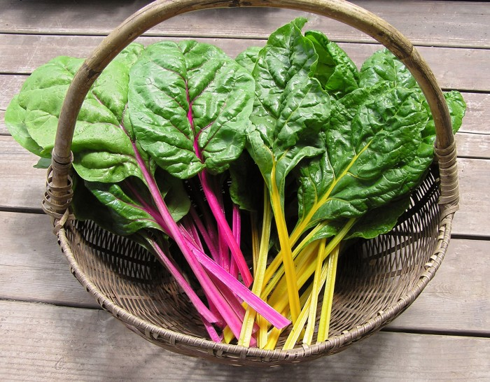 Brightly coloured stems of Neon Chard.