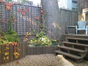 Raised beds surround a large tree.