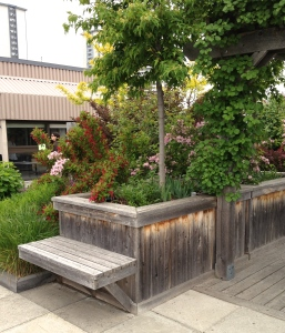 Raised beds with benches.