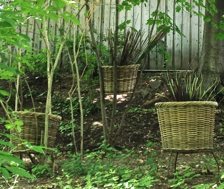 Wicker containers are set in amongst saplings.