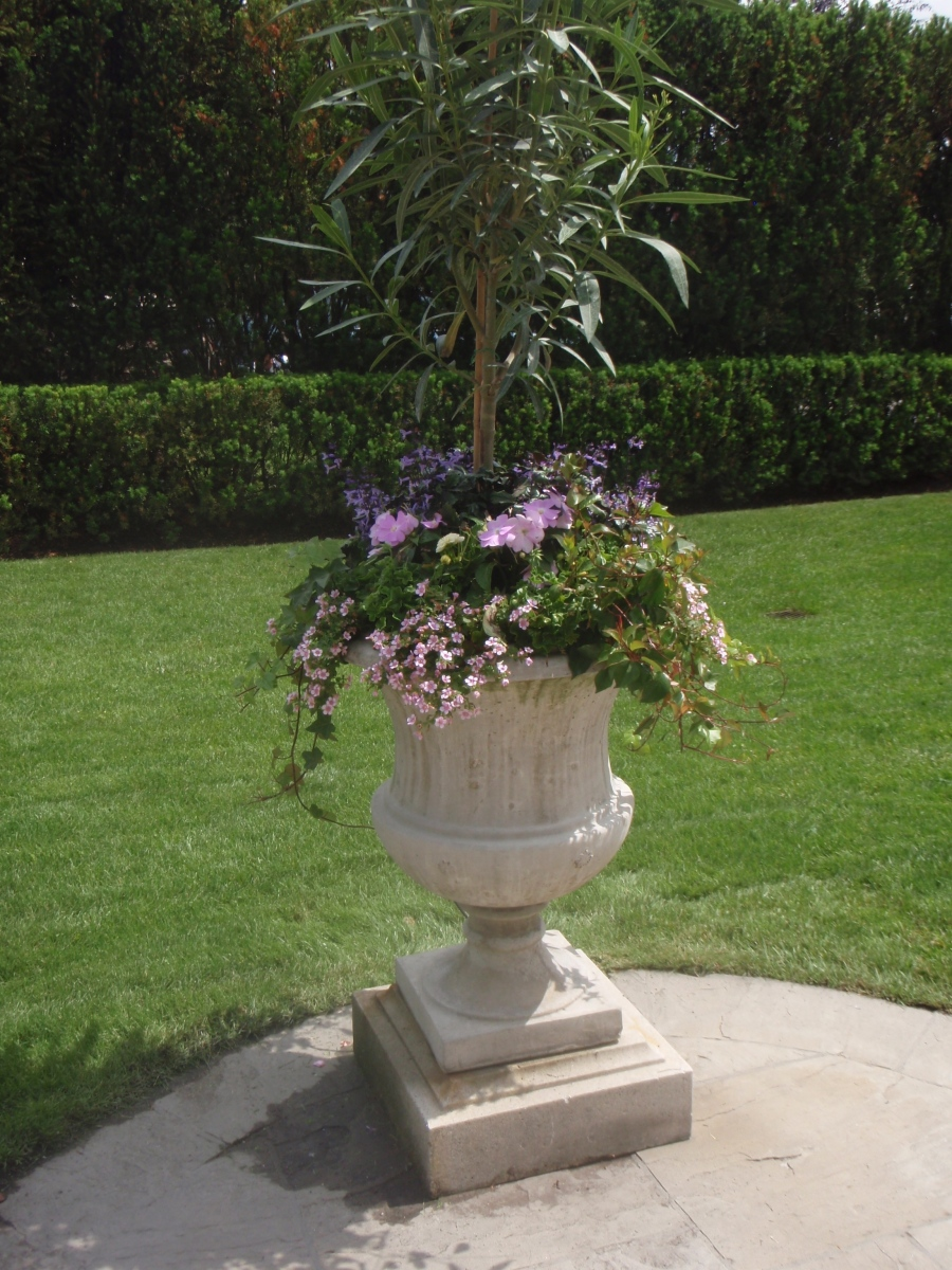 A stone container is planted with trailing flowers and a very tall standard.