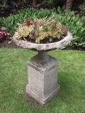 A traditional bird bath is filled with succulents