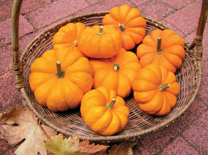 A basket of mini pumpkins.