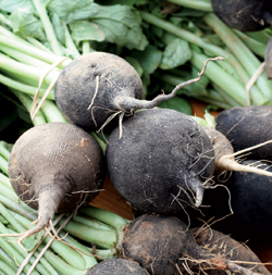 A bunch of black radishes.