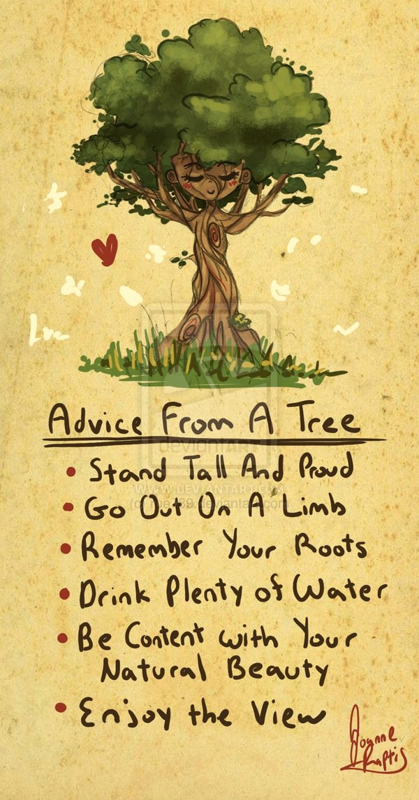 More) Advice from a tree | Ministry of the fence