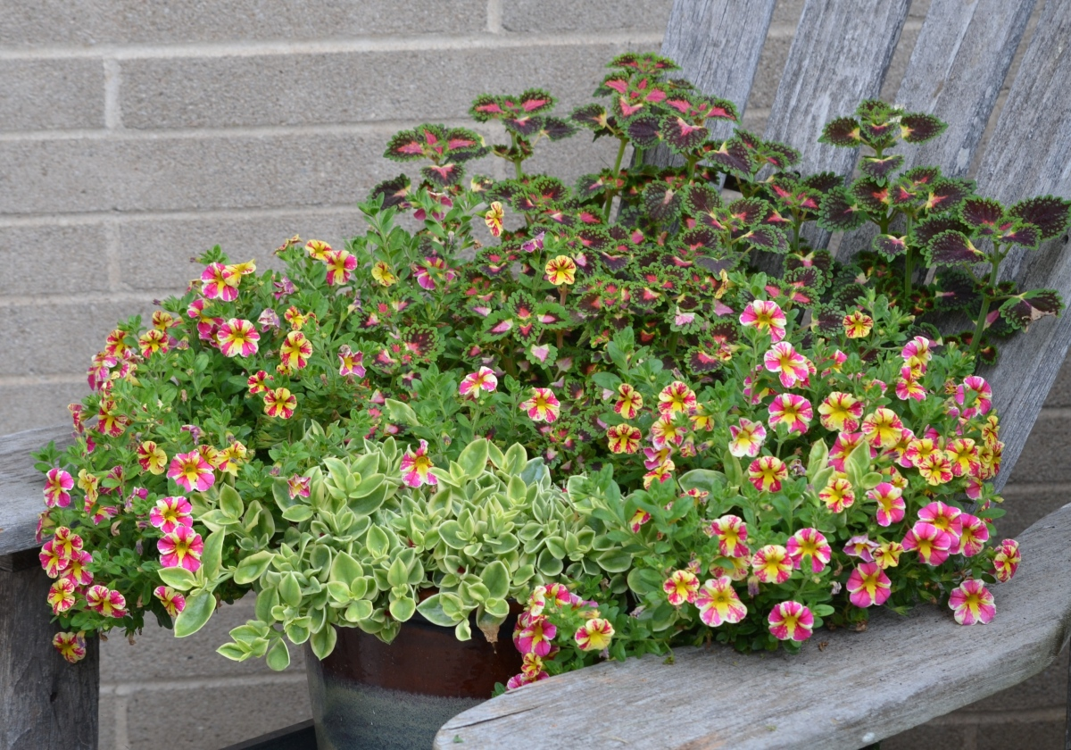 A container filled with yellow and pink trailing flowers.