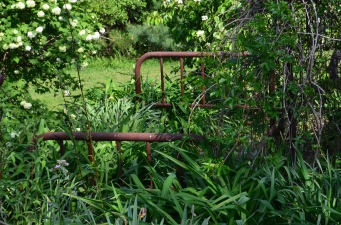 An old metal bed frame is used as found art in a garden bed.