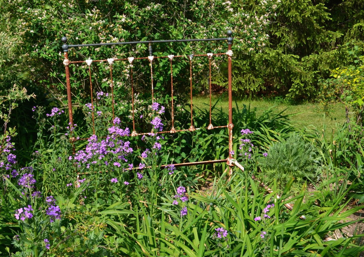 An antique metal bed frame is used as found art and plant support in a flower bed.