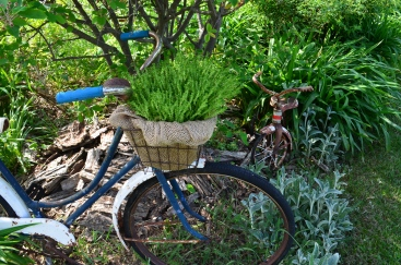 A bicycle and a trike become garden art and plant containers.