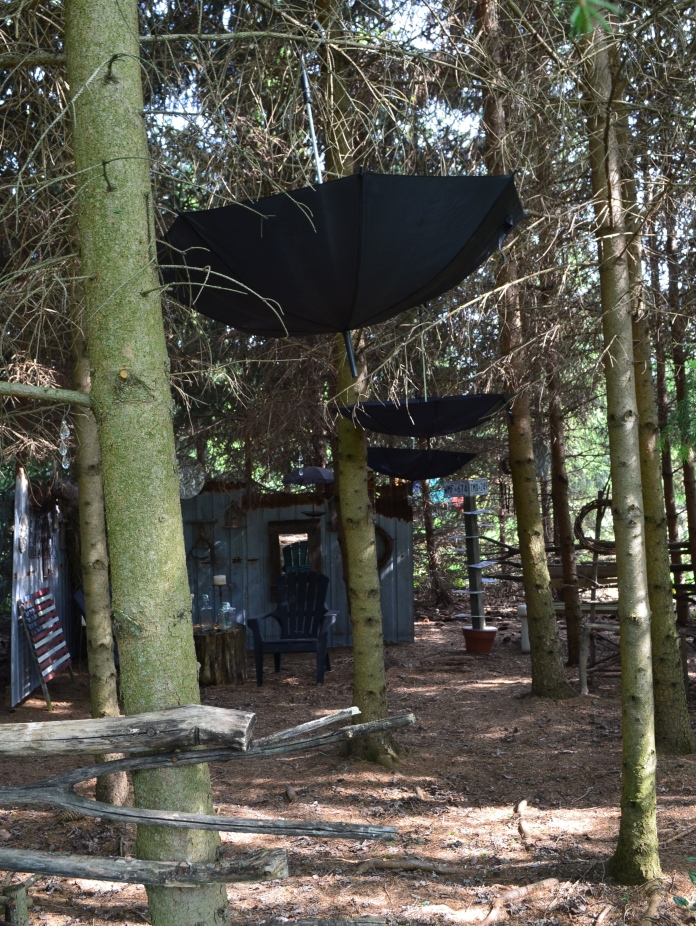 Black umbrellas are suspended within a conifer grove.