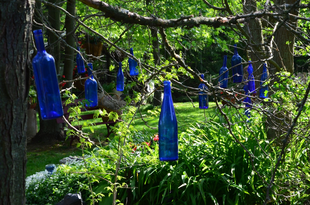 Blue glass bottles hang from branches in a garden glen.