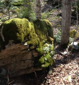 Moss on a limestone boulder.