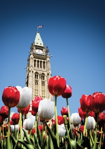Red and white tulips with Parliament Building symbolic of Canada's 150th birthday celebration tulip garden giveaway