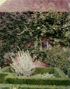 A detail shot of the White Garden at Sissinghurst