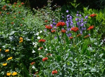 A bed of flowers in a variety of hot colours.