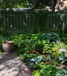 An angular path leads past beds of hostas surrounded by a fence