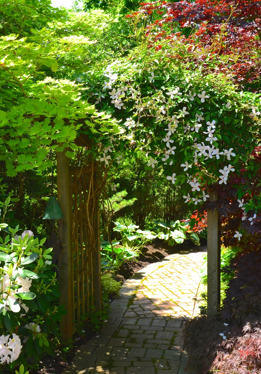 An arch is framed by a clematis on one side