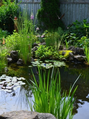 A garden pond with lily pads