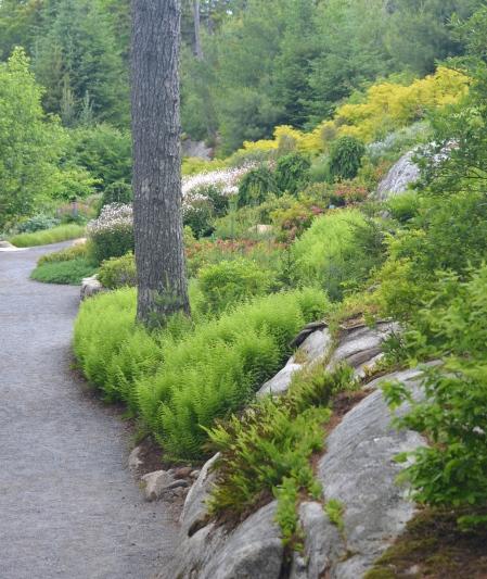 A woodland garden hillside planting