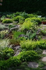 A rock garden with a variety of green plants