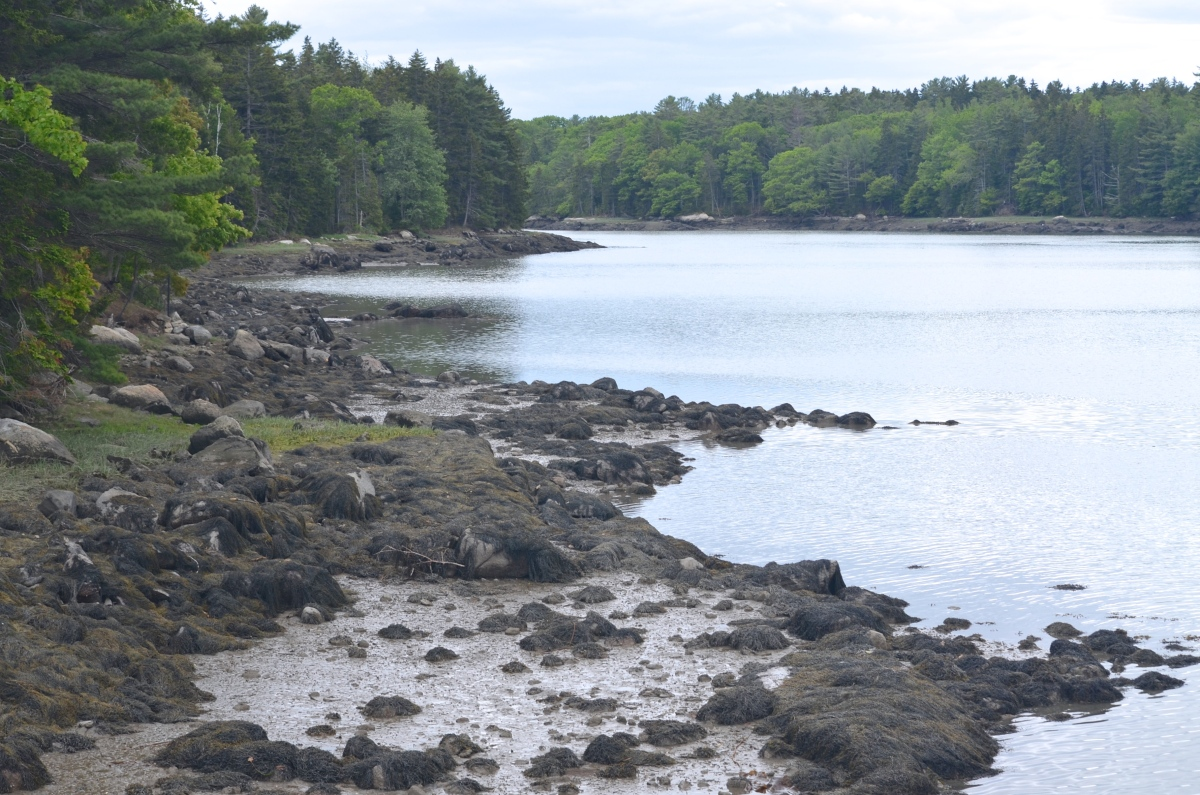 A landscape photo of a portion of Maine coastline at the edge of a woodland garden.
