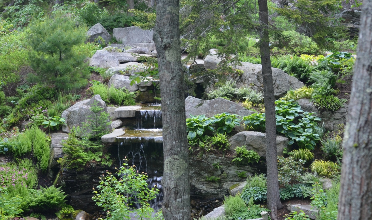 A waterfall using natural rock in a rhododendron garden.