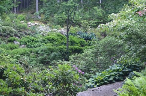 Mixed plants including hostas in a rhododendron garden.
