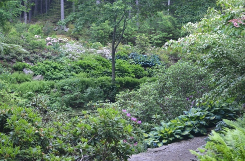 Mixed plants including hostas in a rhododendron garden.