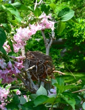 An ornamental nest in a shrub with pink flowers.