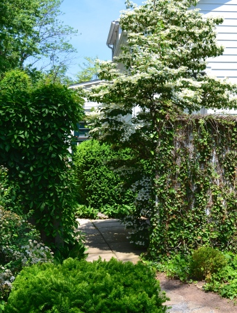 Vine covered walls in a small garden add dimension.