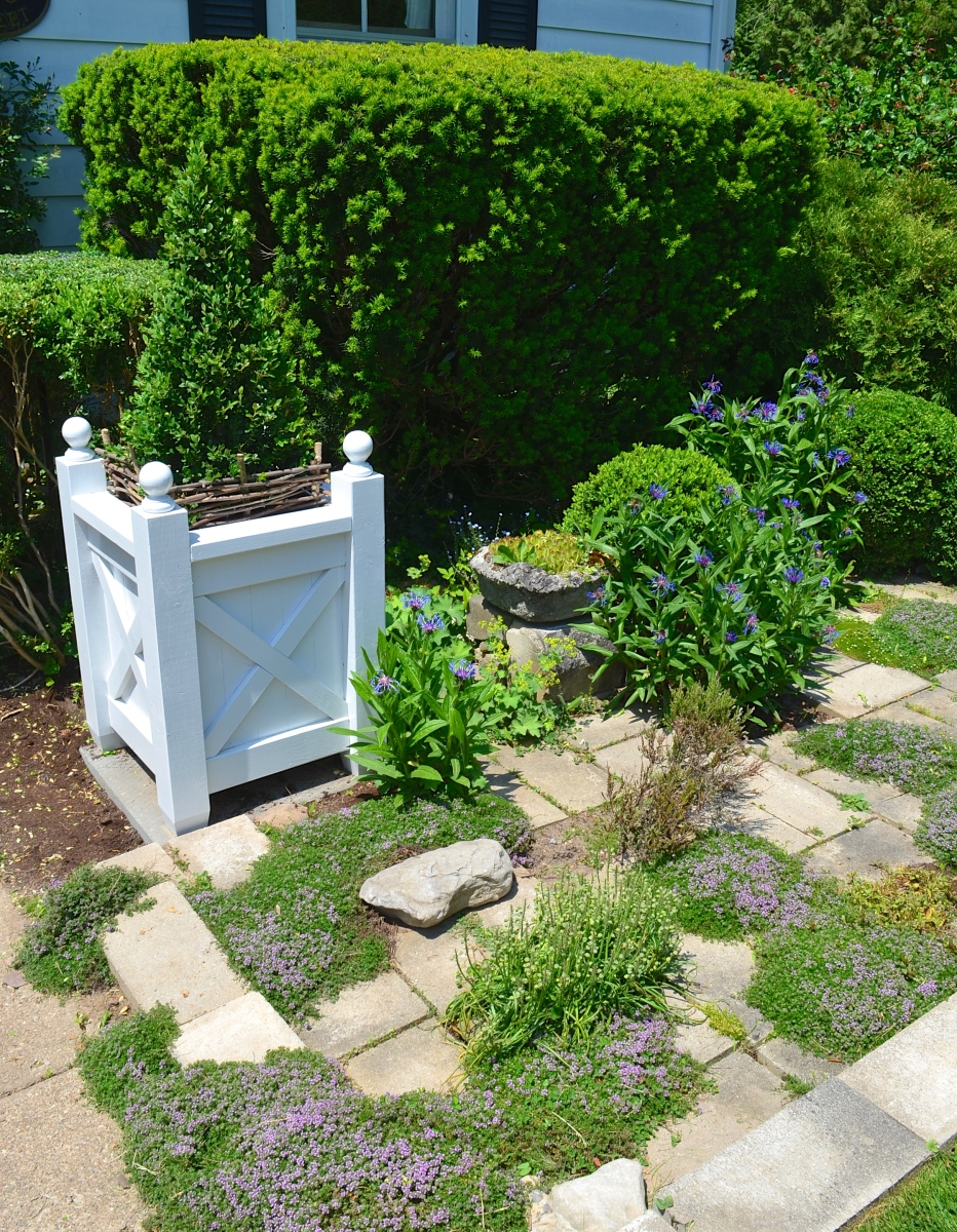 A small front garden features clipped evergreen shrubs and low growing ground cover