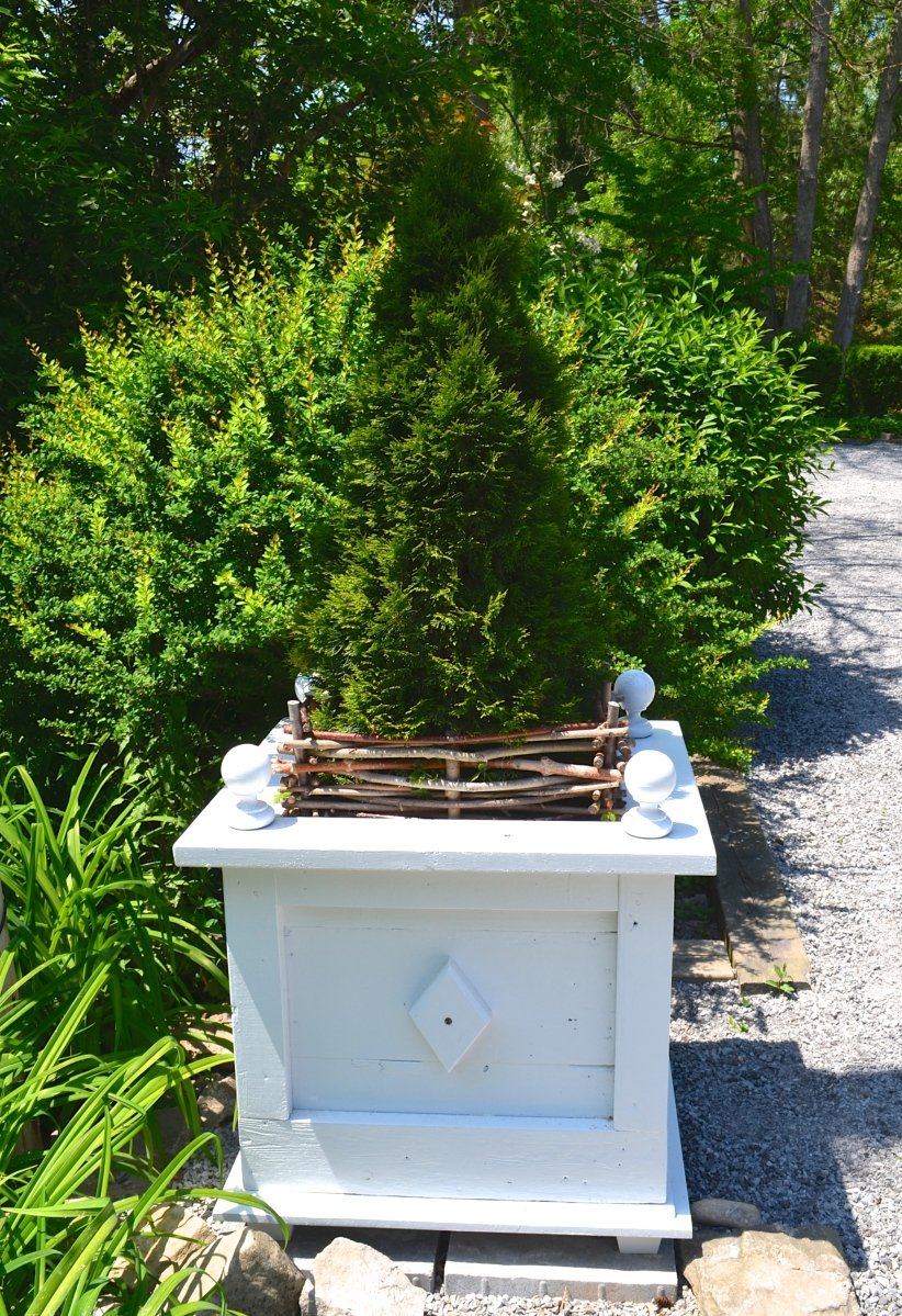 An evergreen shrub in a formal plant container with added twig edging.