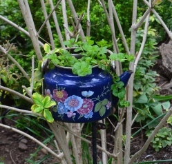 A teapot is used as a plant container