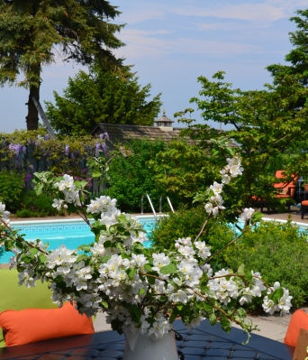Overlooking a bouquet of apple blossoms, you see a swimming pool.