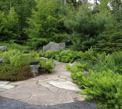 A slate and gravel pathway through a woodland garden on the coast of Maine