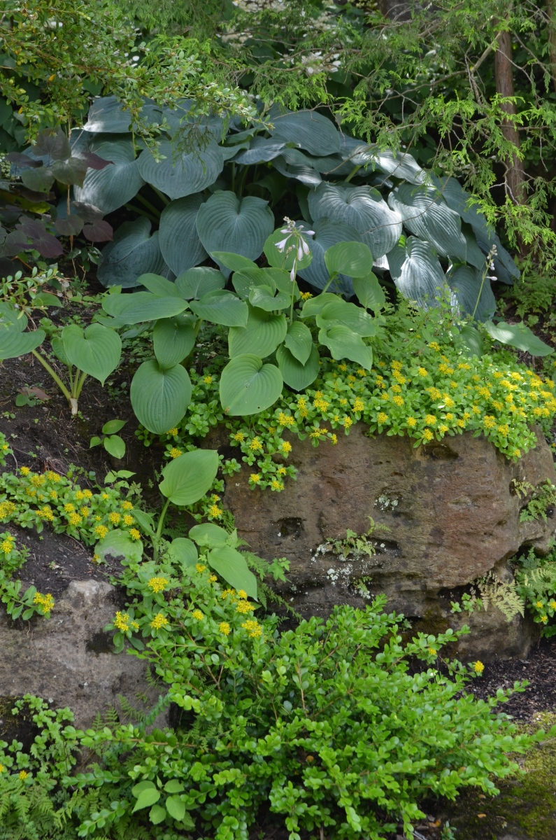 Evergreen shrubs are used in a rock garden.