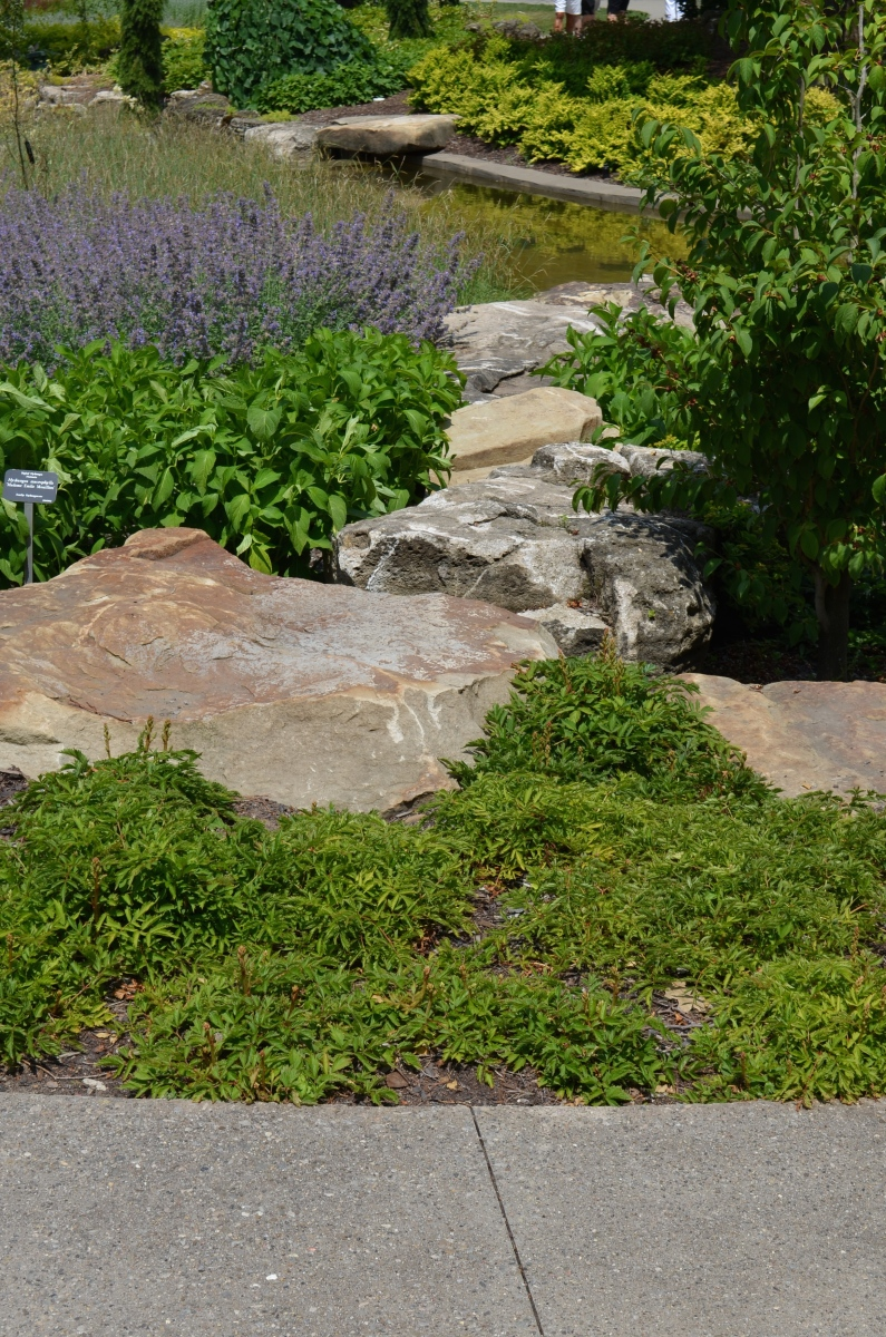 Rocks are positioned in a rock garden to look like a path.