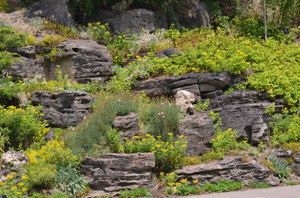 A steep wall of rock with a variety of plants in a rock garden.