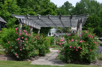 A view through two rose pergolas