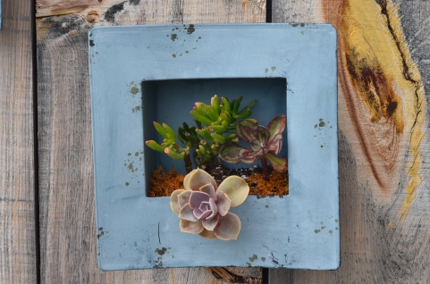 A metal framed plant container on a wall holds a variety of succulents