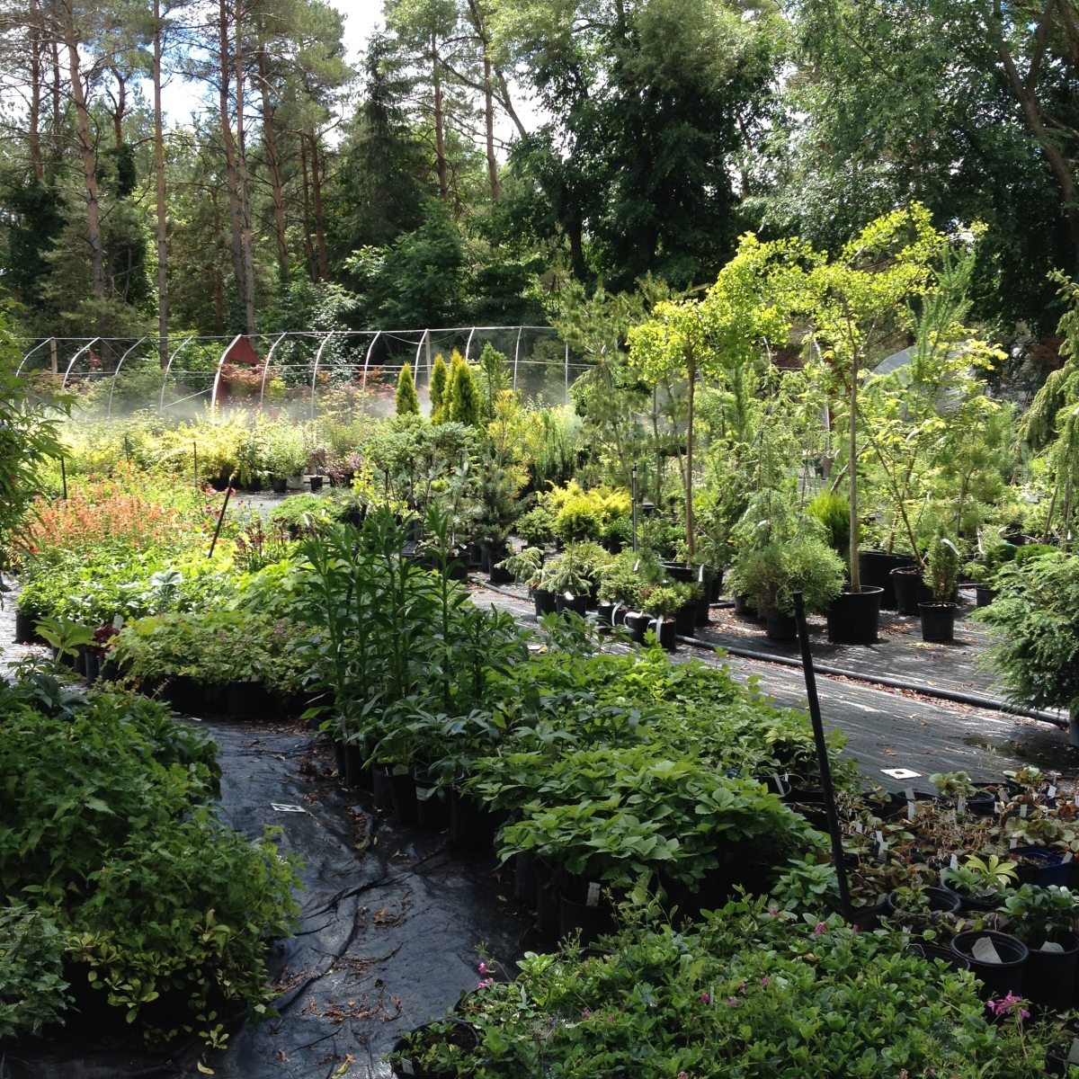 Pots of trees, shrubs and perennials for sale at Lost Horizons