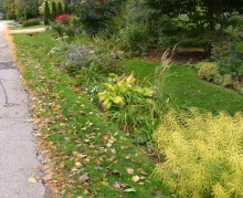 A ditch is filled with plants to create a rain garden.