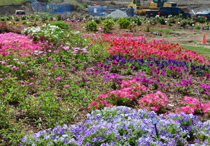 Brightly coloured flower beds are bordered by a construction zone.