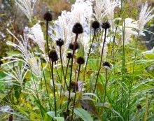 Examples of flower heads and stems that should be left as is during fall garden clean up.